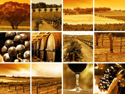 albemarle wine tour